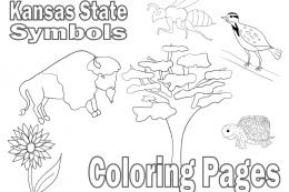 Kansas coloring pages state flower