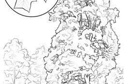 Kansas state tree coloring page