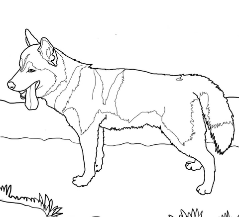 a dog coloring page photo - 1