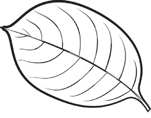 a fall leaf coloring pages photo - 1