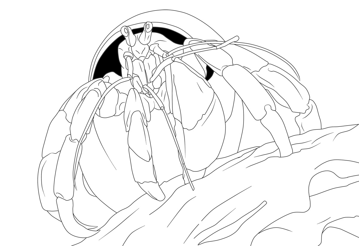 a house for hermit crab coloring pages photo - 1