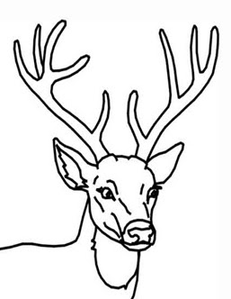 a is for ant coloring page photo - 1