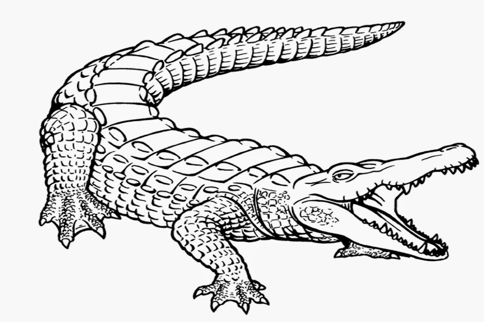 alligator coloring page photo - 1