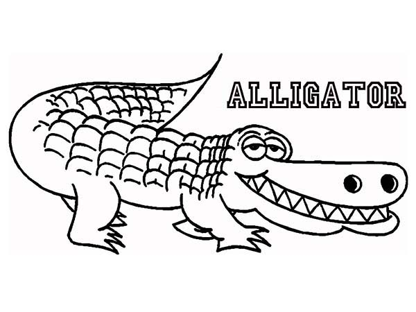 alligator coloring pages photo - 1