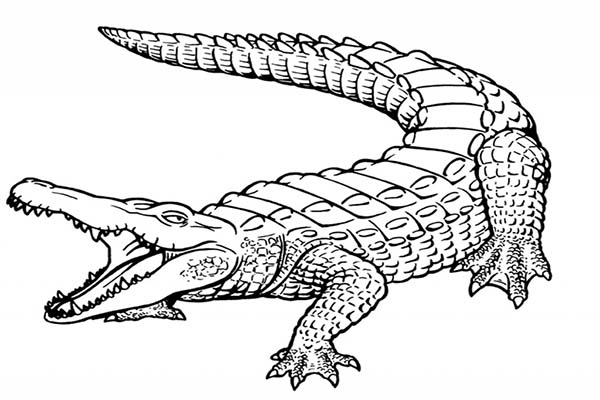 alligator coloring pages printable photo - 1