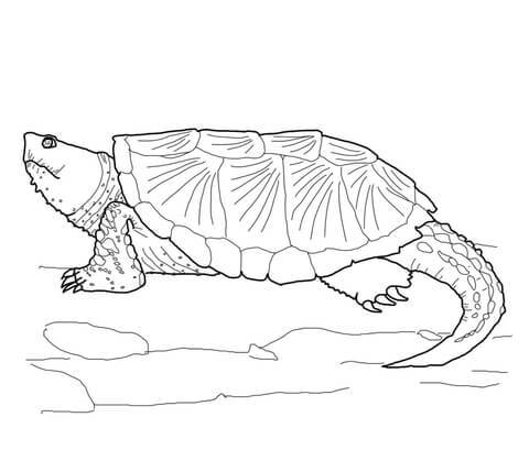 alligator snapping turtle coloring page photo - 1