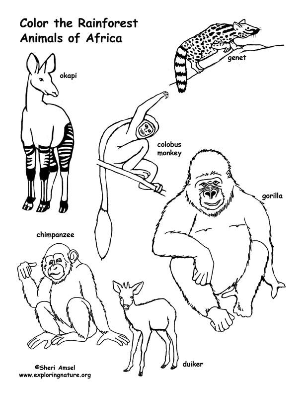 amazon rainforest animals coloring pages photo - 1