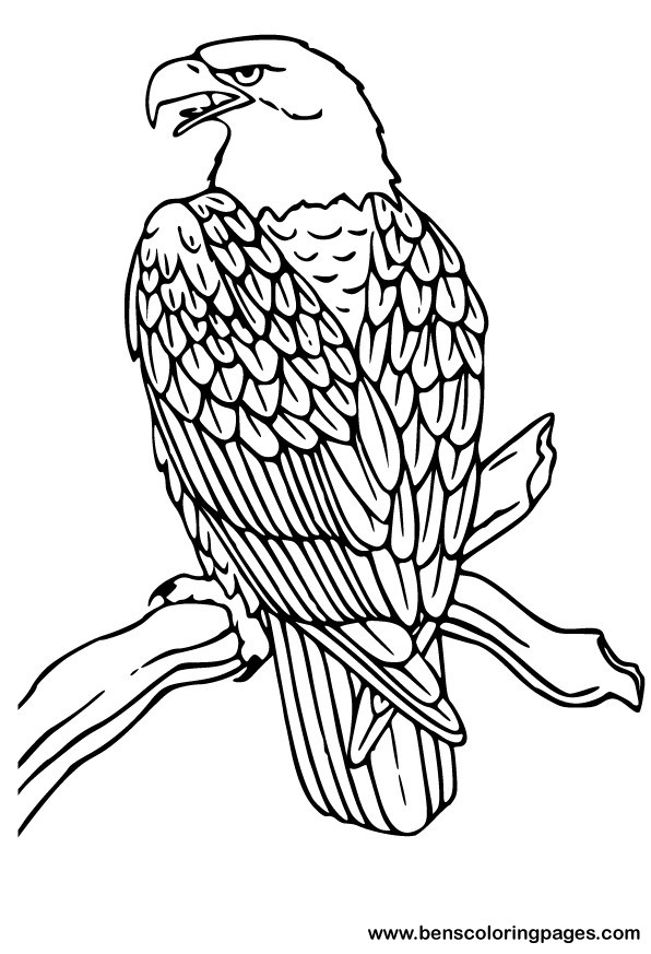 american bald eagle coloring pages photo - 1