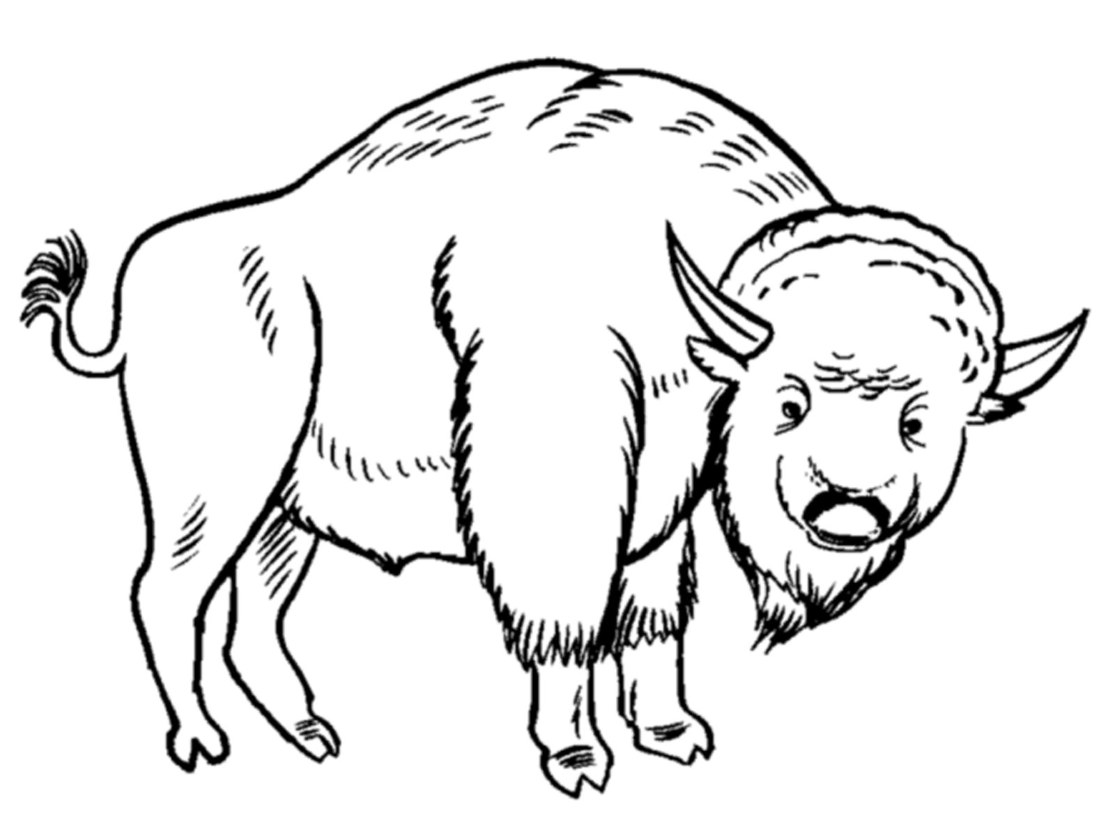 american bison coloring page photo - 1