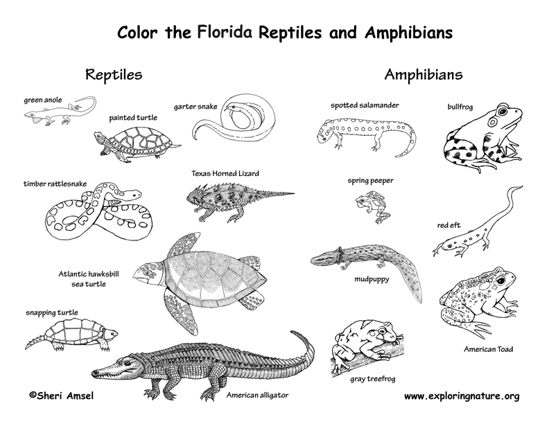 amphibians and reptiles coloring pages photo - 1