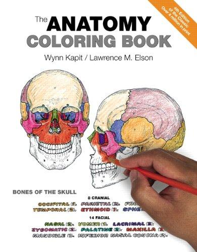anatomy and physiology bones coloring pages photo - 1