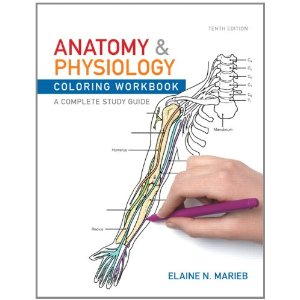 anatomy and physiology coloring book pages photo - 1