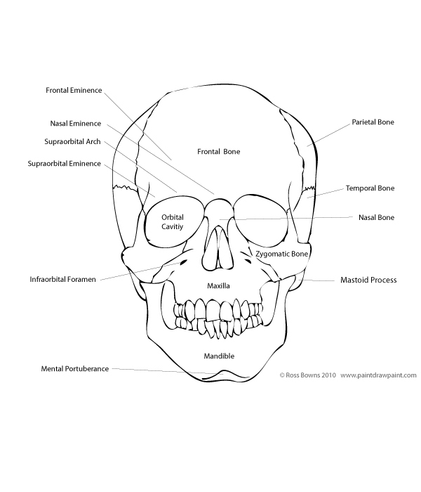 anatomy coloring pages skull photo - 1