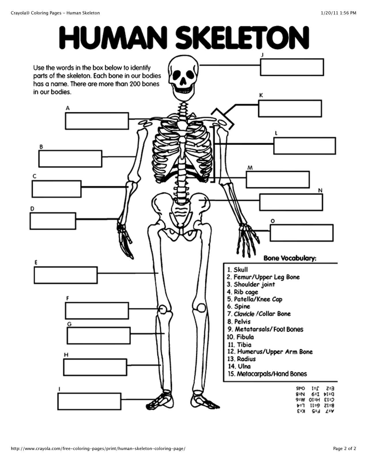 anatomy of the human body coloring pages photo - 1