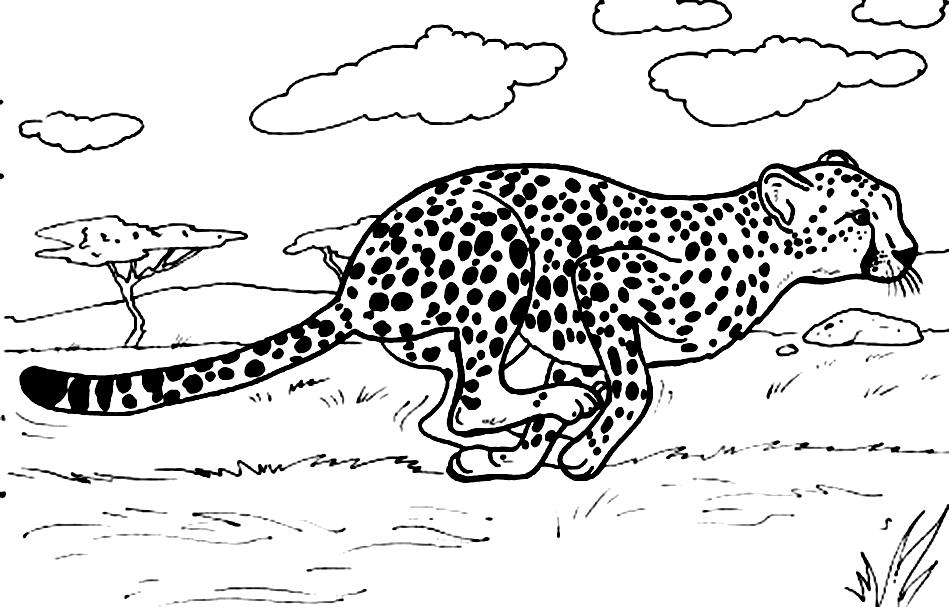 cheetah coloring pages photo - 1