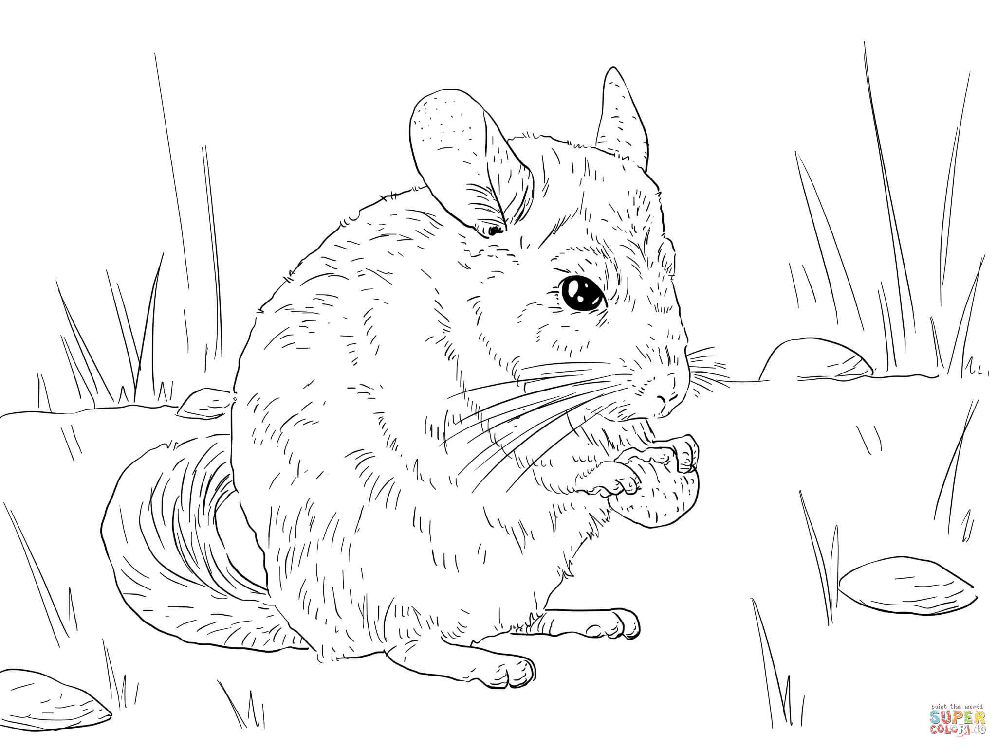 chinchilla coloring pages photo - 1