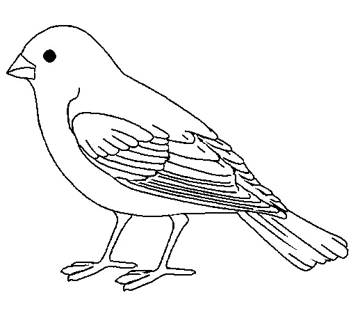 chipping sparrow coloring page photo - 1