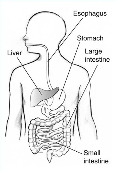 coloring pages for human body systems photo - 1