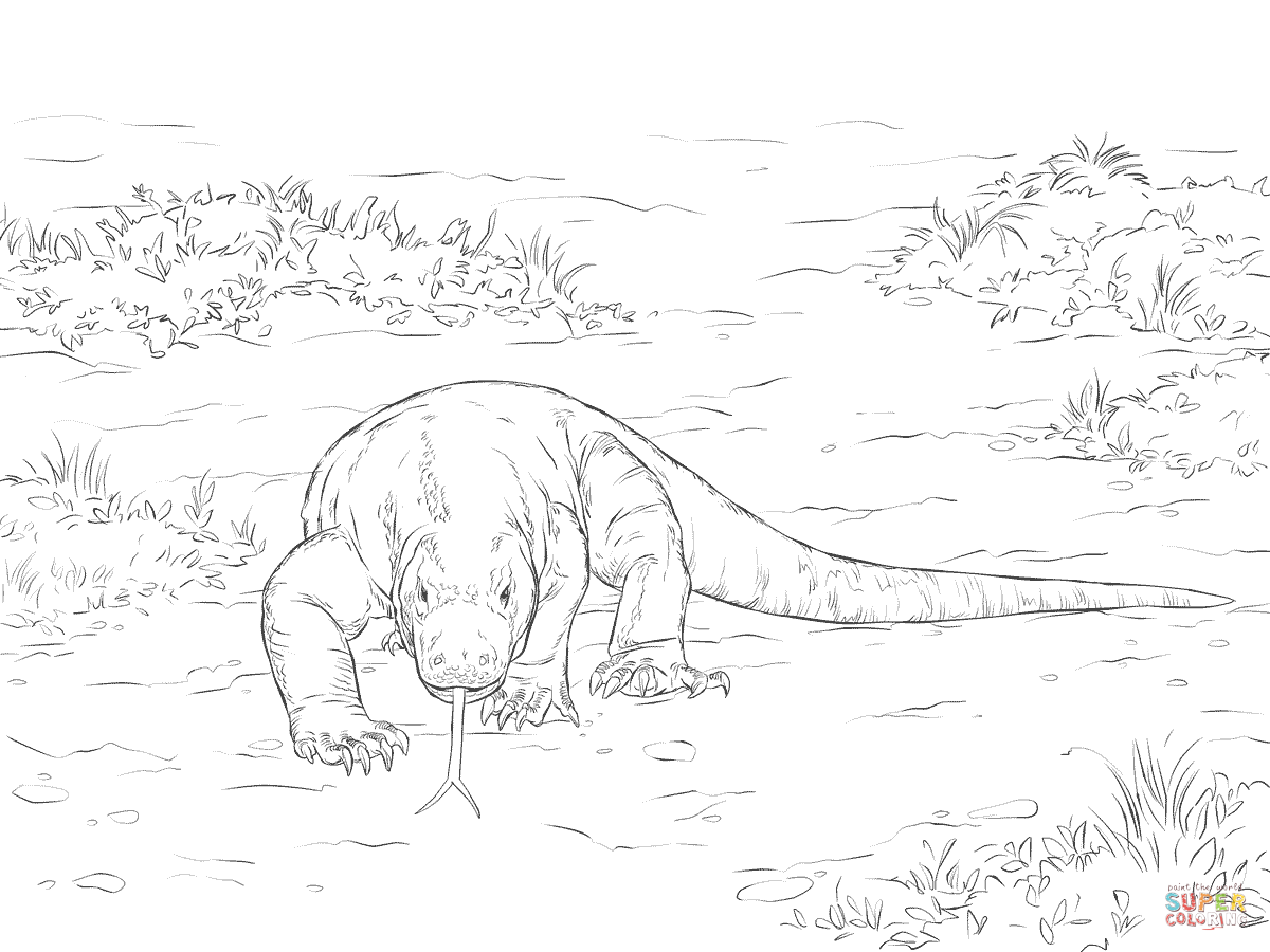 coloring pages for komodo dragons photo - 1