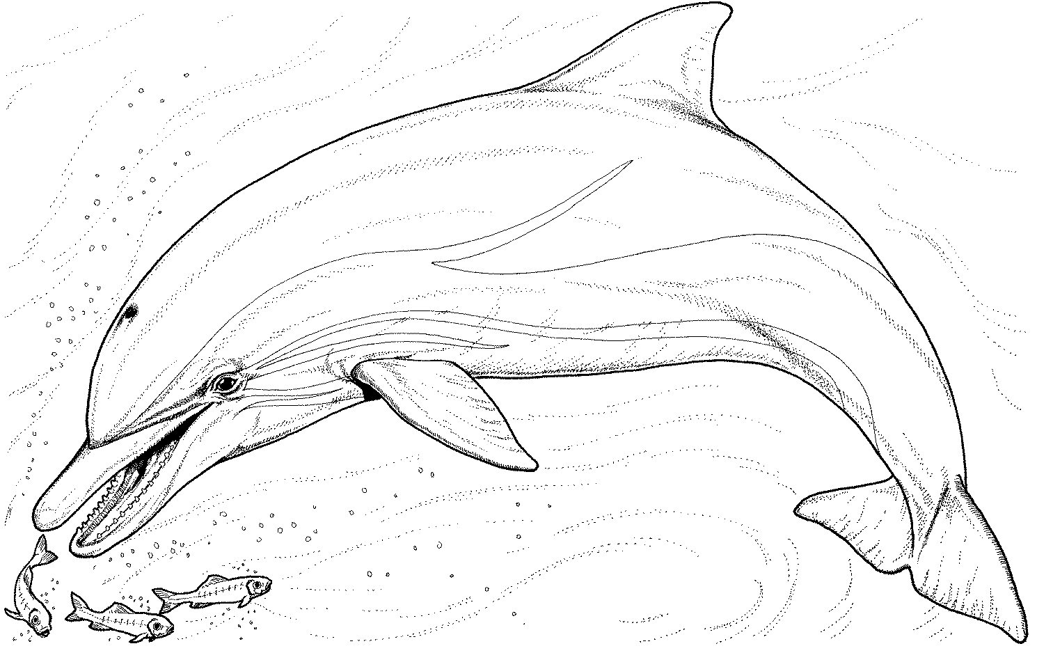 dolphin coloring pages photo - 1