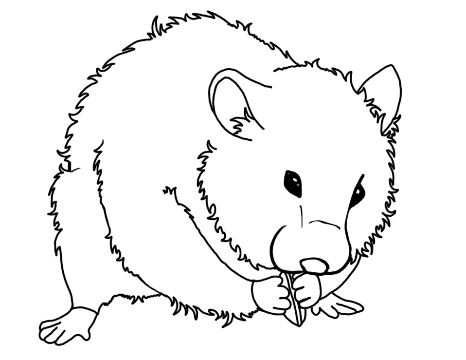 free printable hamster coloring pages photo - 1