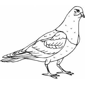 free printable hidden picture coloring pages photo - 1