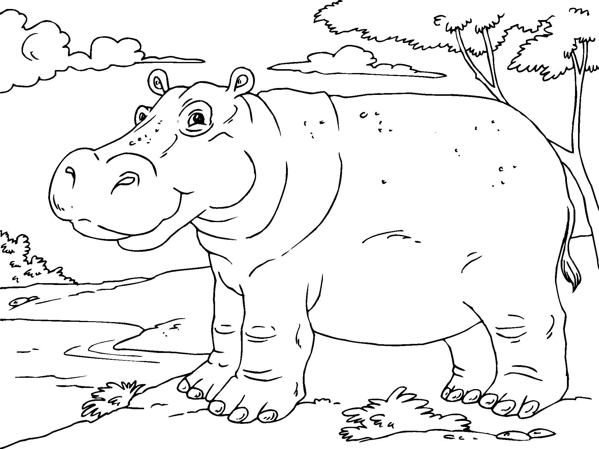 free printable hippo coloring pages photo - 1