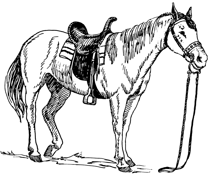 free printable horse coloring pages photo - 1