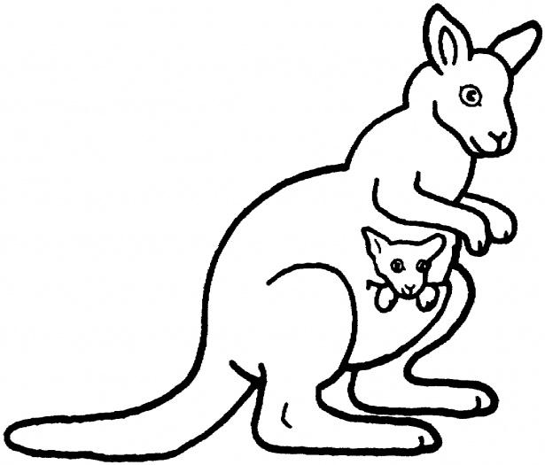 kangaroo color pages photo - 1