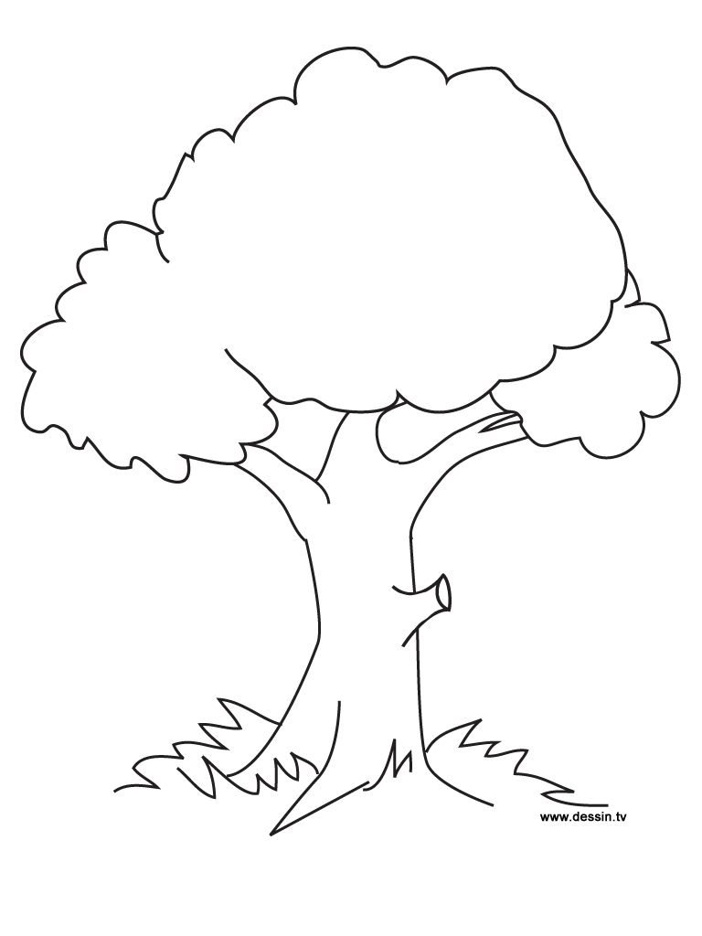 tree coloring pages photo - 1